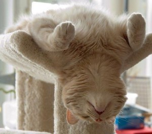 02c62_4841-This_cat_is_taking_it_easy_just_relax...